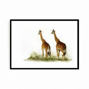 A walk to remember (giraffes)